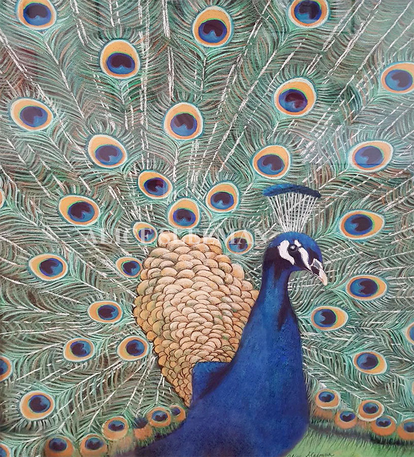 Peacock by Alice Sleeman