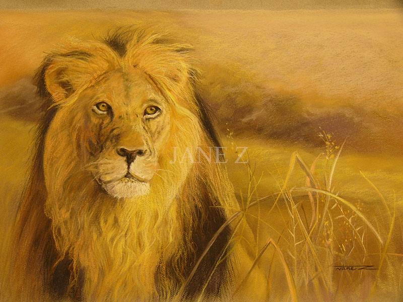 Lion pastel drawing by Jane Z